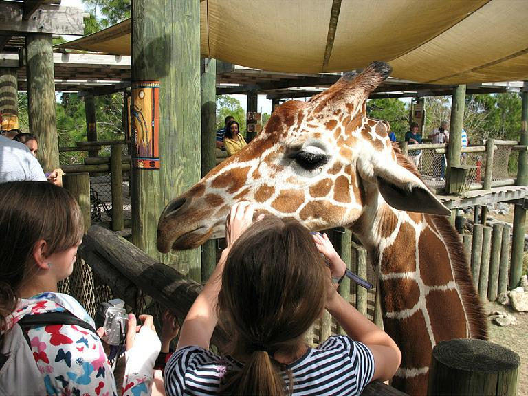 Image result for brevard zoo animals