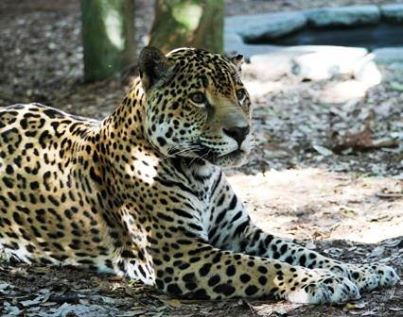 Photo Credit: Brevard Zoo